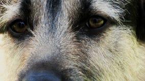 狗眼睛 免版税库存照片