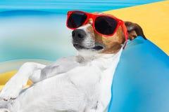 狗睡眠在夏天 免版税图库摄影