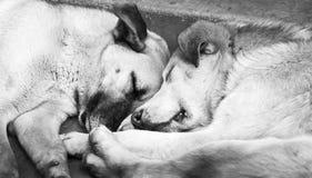 狗睡觉黑白 库存照片