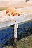 狗码头休眠 库存照片