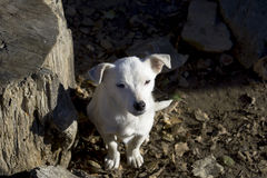狗空白的一点 免版税图库摄影