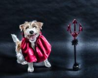 狗穿戴了在万圣节 库存照片