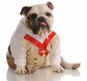 狗穿戴了正式穿戴 免版税库存照片