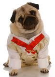 狗穿戴的礼服 免版税库存图片