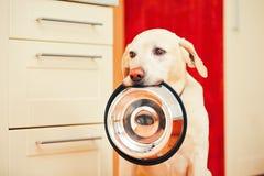 狗等待哺养 免版税图库摄影