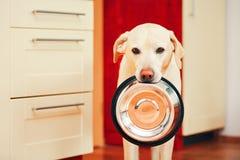 狗等待哺养 库存图片
