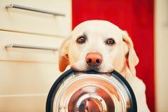 狗等待哺养 免版税库存图片