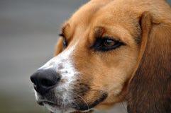 狗纵向 免版税库存照片