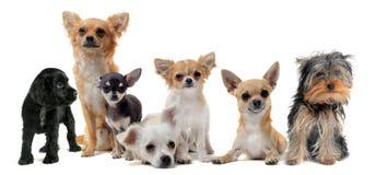 狗组 免版税库存照片
