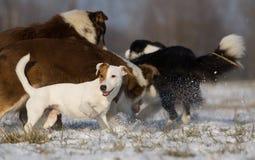 狗组 免版税图库摄影