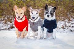 狗结冰的冰冷的夫妇在雪的 图库摄影