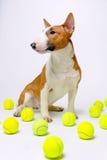 狗网球 免版税库存图片