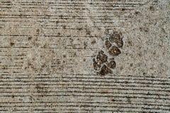 狗脚印刷品 免版税库存照片