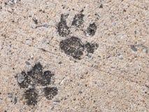 狗脚印或狗步在具体水泥街道上看 免版税库存照片