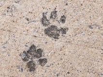 狗脚印或狗步在具体水泥街道上看 免版税库存图片