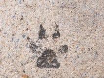 狗脚印或狗步在具体水泥街道神色 库存图片