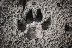 狗脚印特写镜头在破裂的地面的 库存图片