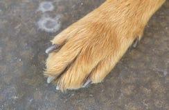 狗脚和腿 免版税库存照片