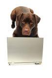 狗膝上型计算机 免版税库存照片