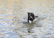 狗自来水 图库摄影