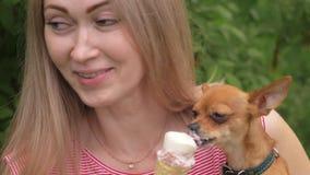 狗舔冰淇凌 妇女的一只忠实的宠物在她的胳膊坐 玩具狗吃可口奶油色冰淇凌 股票视频