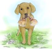 狗草图水彩 库存图片