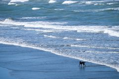 狗获得乐趣在海滩 图库摄影