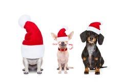 狗行圣诞节假日 免版税库存图片