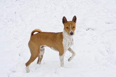 狗表面剥落雪 库存图片