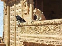 狗观察从阳台的街道 免版税库存图片
