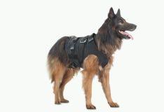 狗警察 库存照片