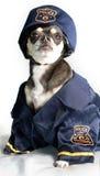 狗警察 库存图片