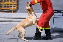 狗警察 免版税库存照片
