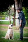 狗训练,逗留命令,守纪 免版税库存照片