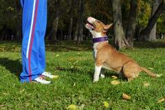 狗训练过程 免版税库存照片