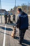 狗训练 库存照片
