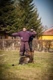 狗训练 免版税图库摄影