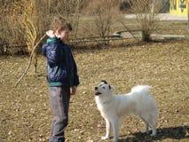 狗训练 免版税库存照片