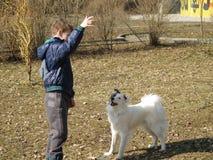 狗训练 库存图片