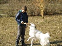 狗训练 免版税库存图片