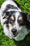 狗请求食物 狗营养 免版税图库摄影