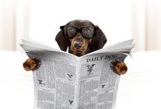狗读书报纸 免版税库存照片