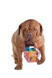 狗购物 免版税图库摄影
