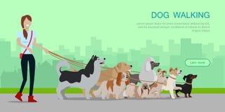 狗走的横幅 用不同的狗的妇女步行 免版税库存图片