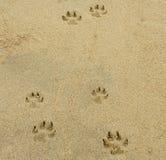 狗跨步脚印 免版税图库摄影