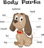 狗身体局部 图库摄影