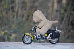 狗软的玩具坐摩托车 库存图片