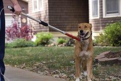 狗迷路者 免版税库存图片
