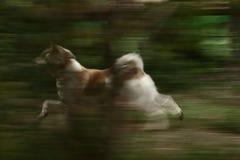 狗迷离  免版税图库摄影