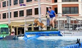 狗追逐并且飞溅入水池 免版税库存图片